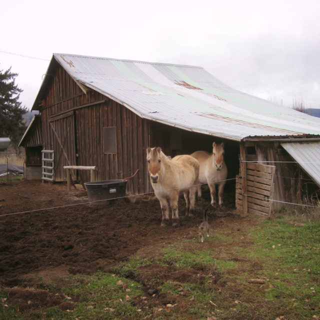 Our Fjord workhorses Betty and Wilma are the main sourcehellip
