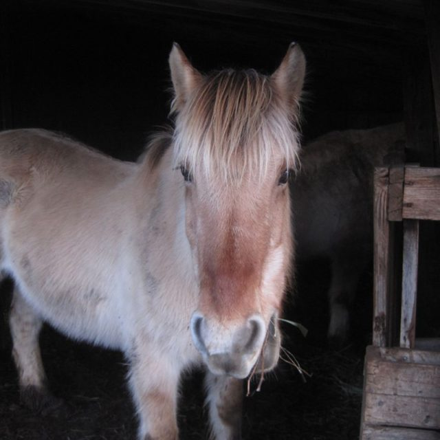 Happy Solstice from Wilma! The mares are getting a littlehellip